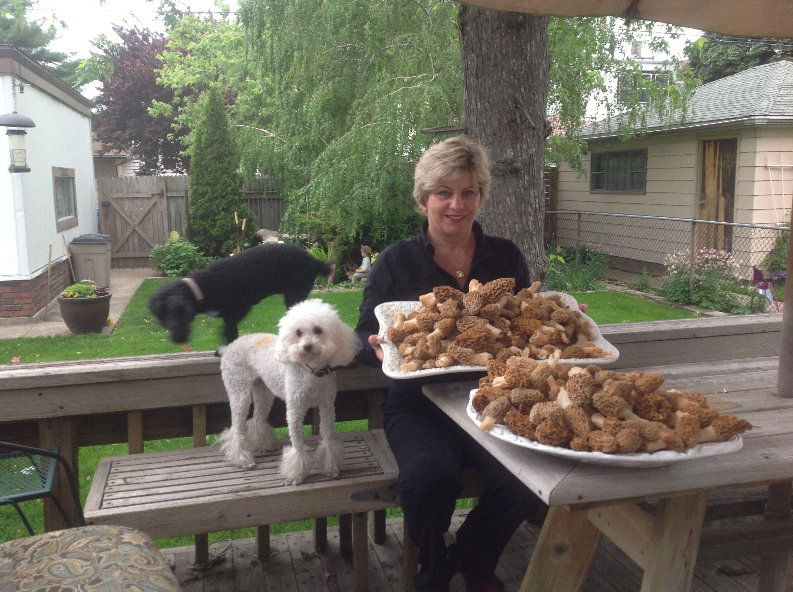 IL Mycological (Mushroom) Assoc: Chicago-based Talks, Forays
