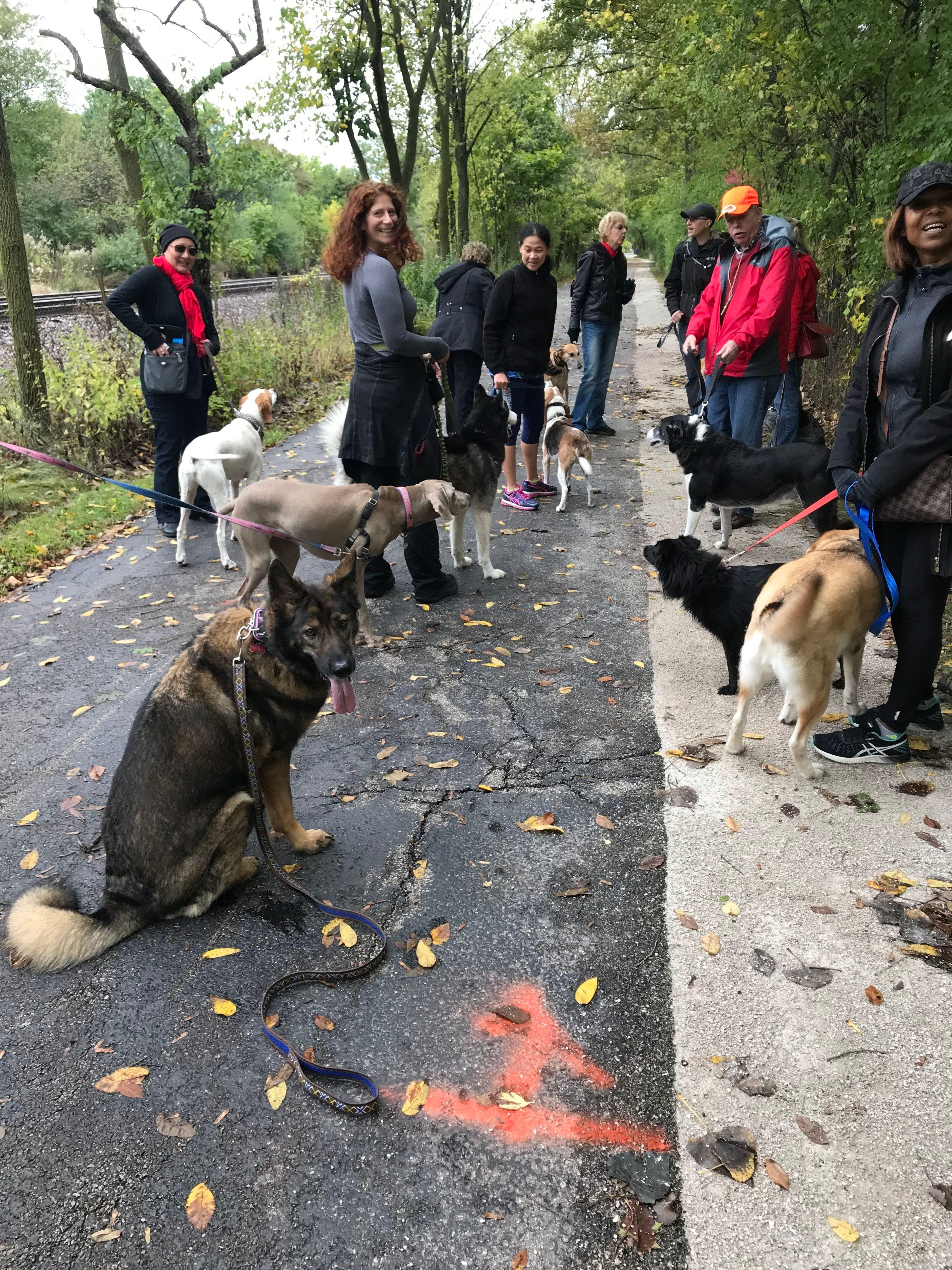 Dog Trekker's - Wilmette/North Shore Pack