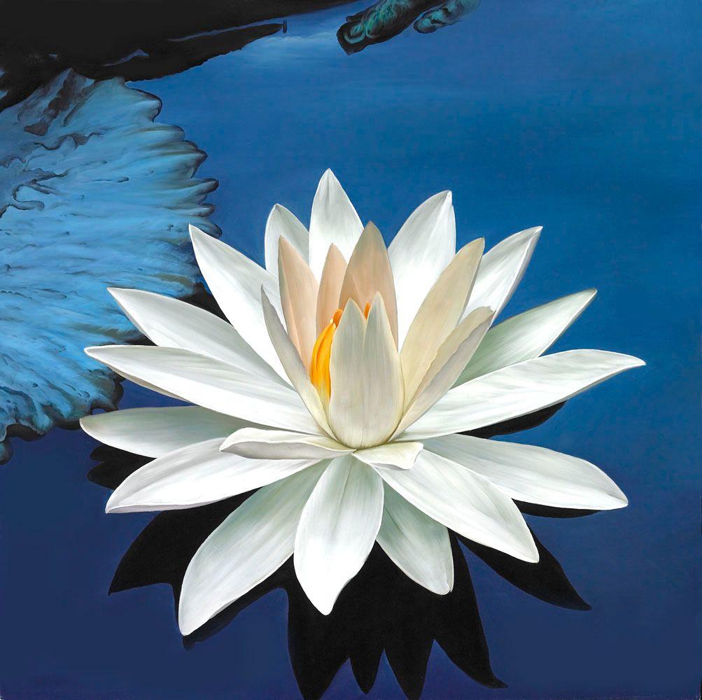 Flowering Heart Meditation Tampa Bay