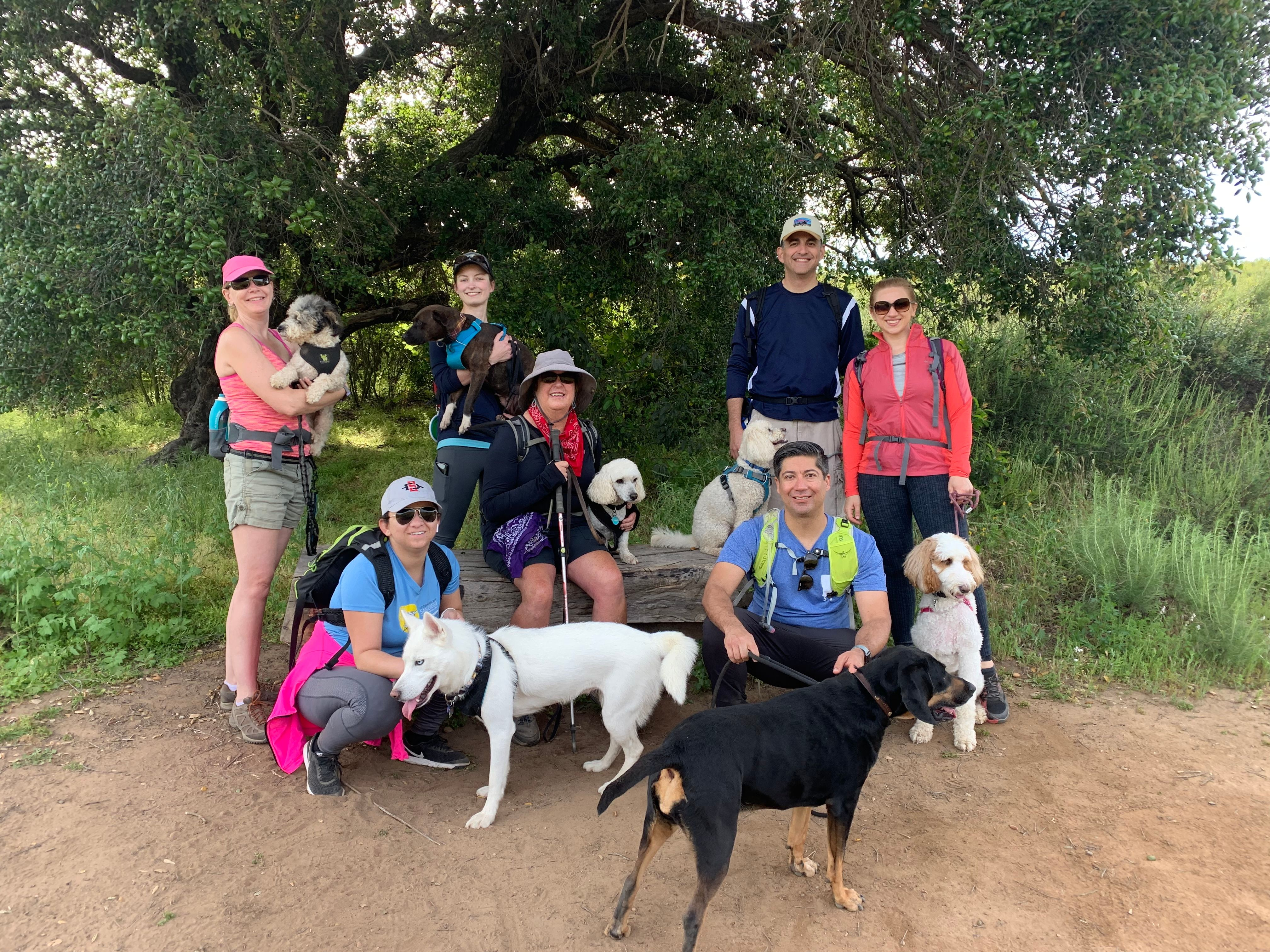 Dog Friendly Hikes and Adventures