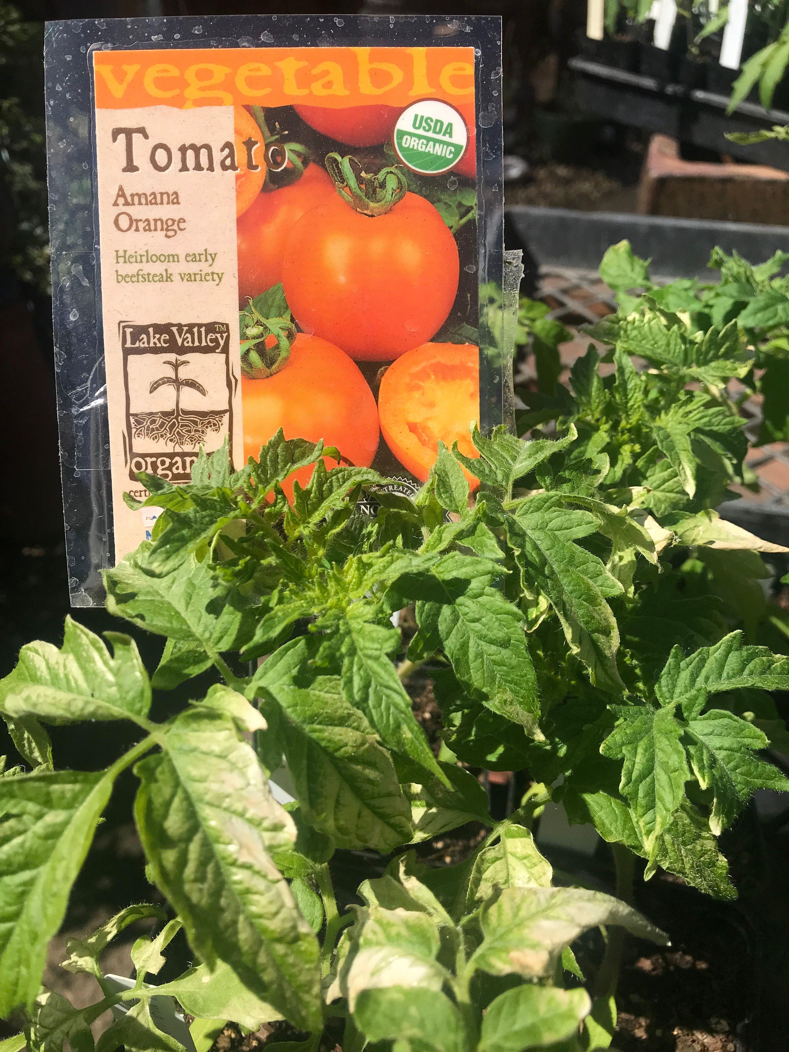 Santa Barbara Food and Farm Adventures