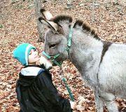New Member Info - Hudson Valley Walk with Donkeys (Ulster Park, NY