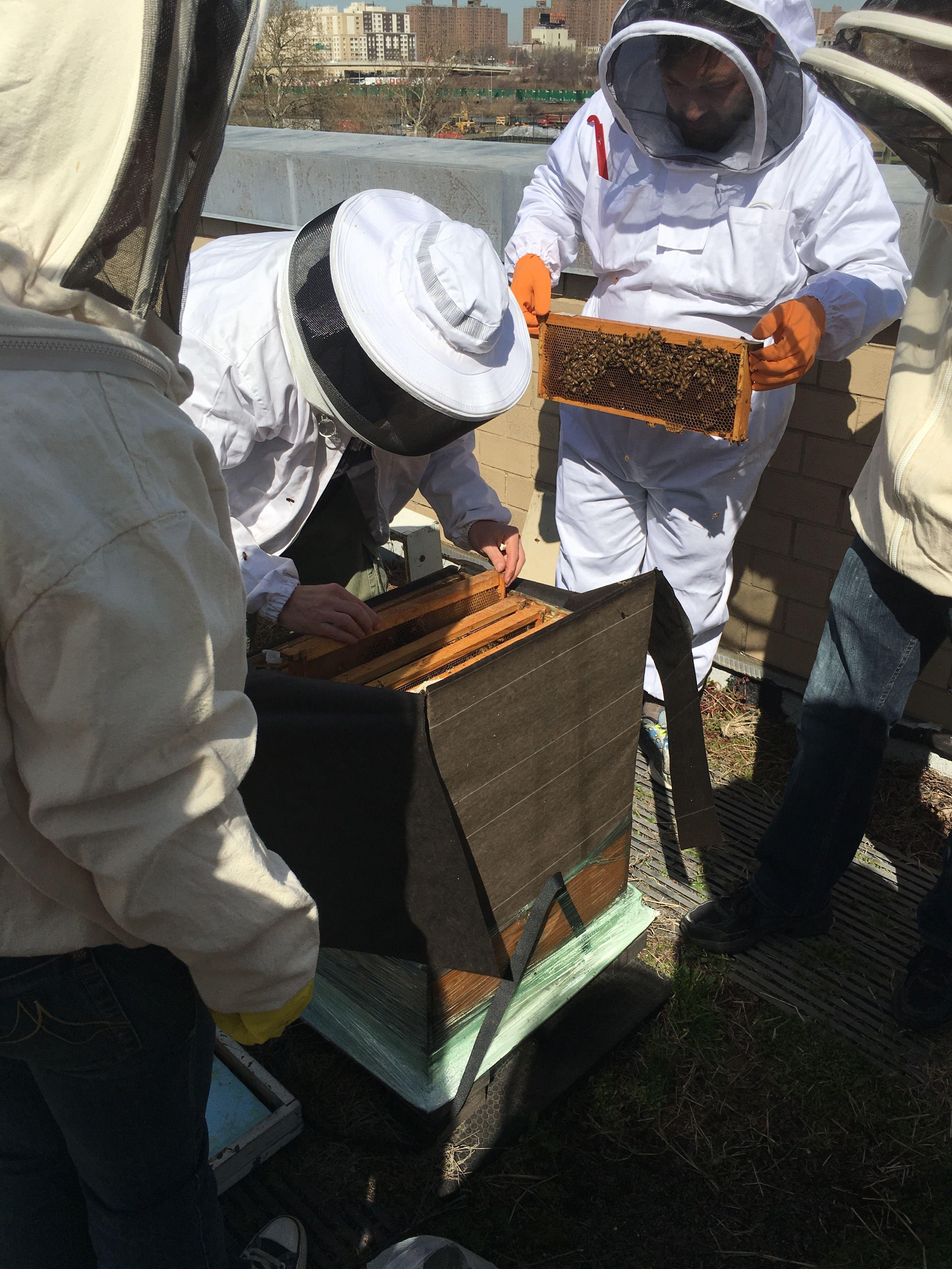 New York City Beekeeping                   nycbeekeeping.org