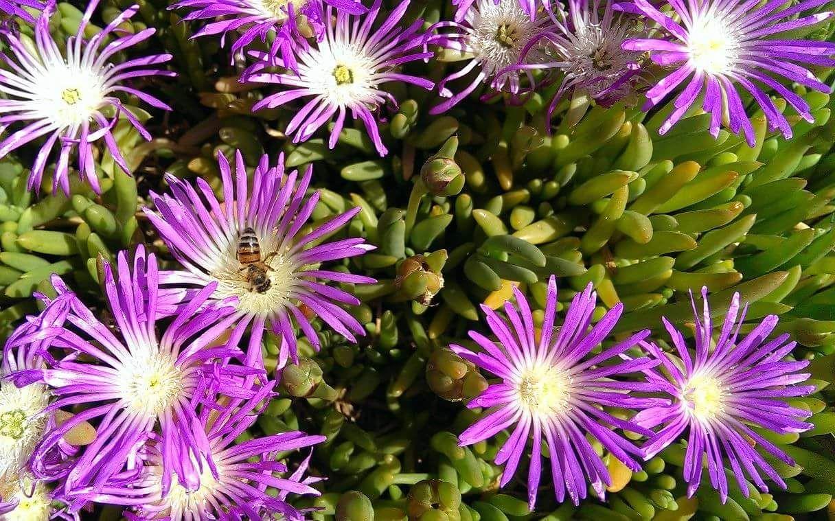 Australian Native Plant Nerds