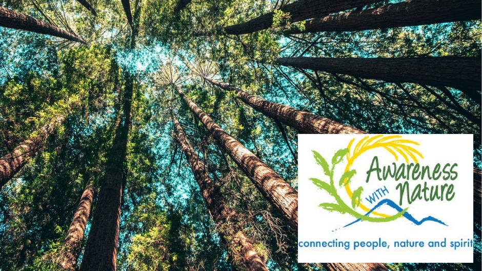 Awareness With Nature/Forest Bathing Meetup