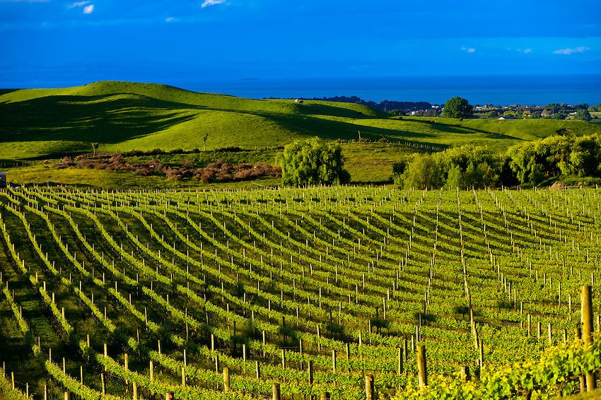 Four course new zealand wine pairing dinner aroha for Aroha new zealand cuisine menu