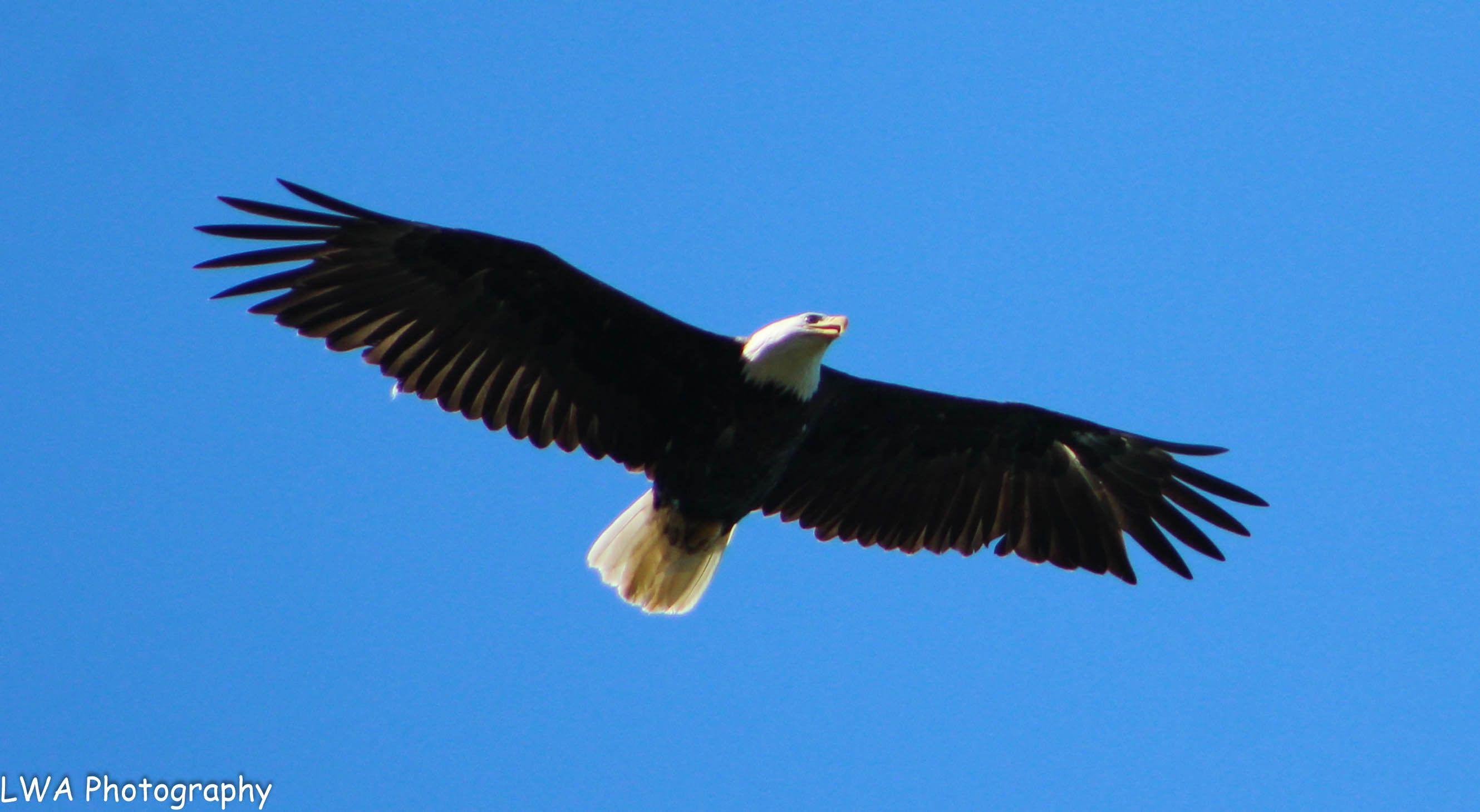Eagle River Camera Club