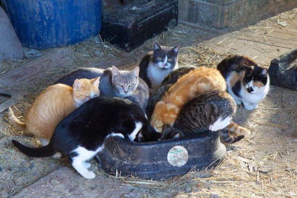 Loudoun Community Cat Coalition Meetup (LC3) (Leesburg, VA ...