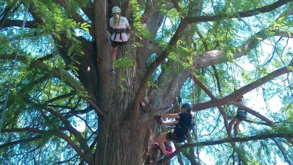 Kentucky Tree Climbing Adventure