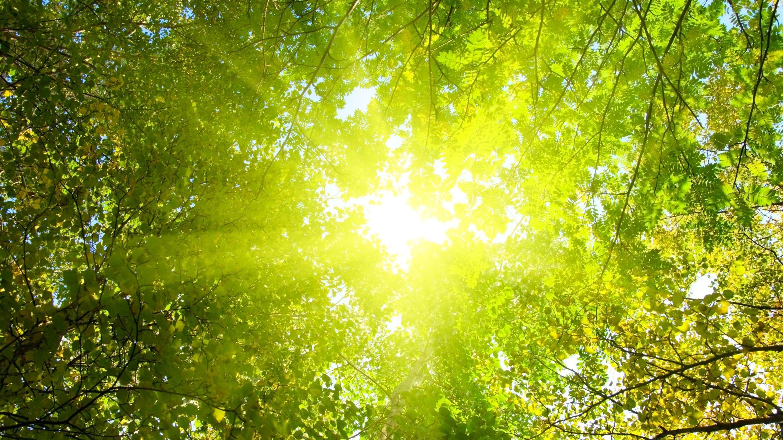 Core Guiding Light