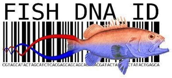 Identify Unknown Organisms From Their DNA