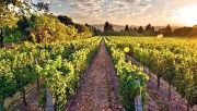 """Photo for Wine Night Networking - """"Off the Beaten Path"""" Exceptional Wines of Italy October 10 2019"""