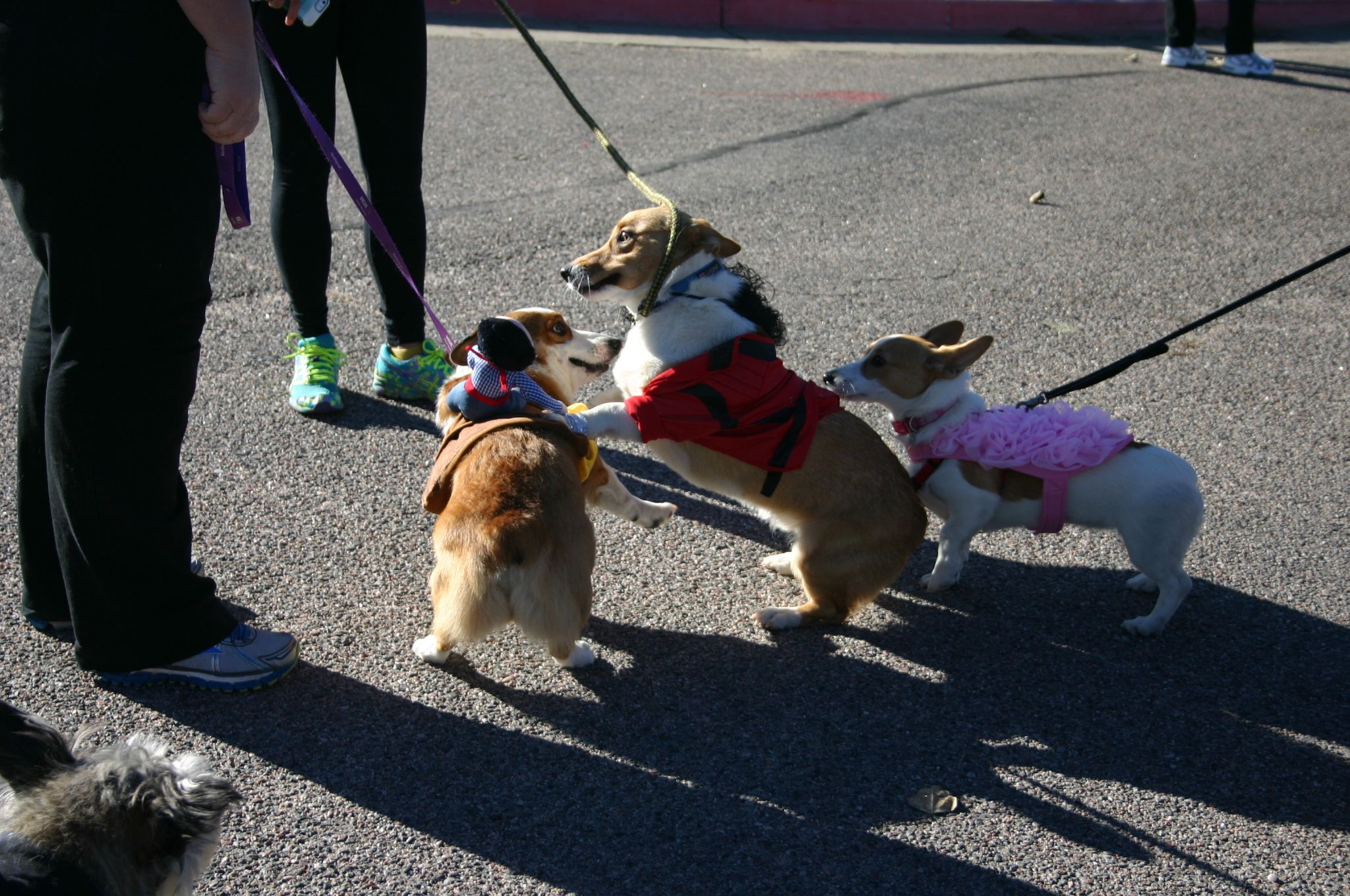 The Littleton Corgi Meetup