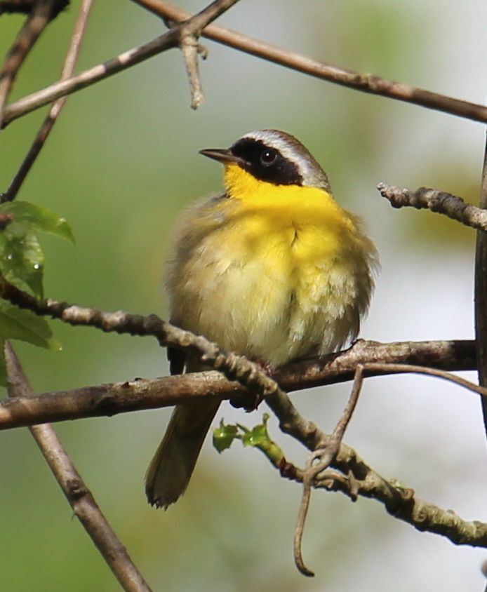 Prince George's Audubon Society