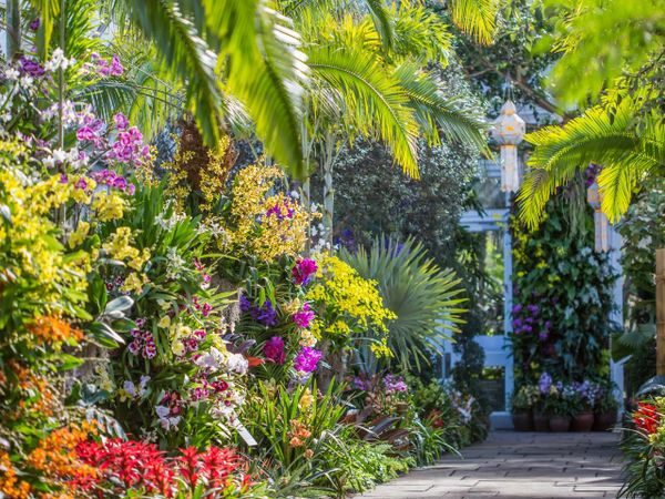 New York Botanical Garden. View Map. Step Into A World Of Stunning Color In  The Enid A. Haupt Conservatory, Where This Annual NYBG Tradition Fills The  ...
