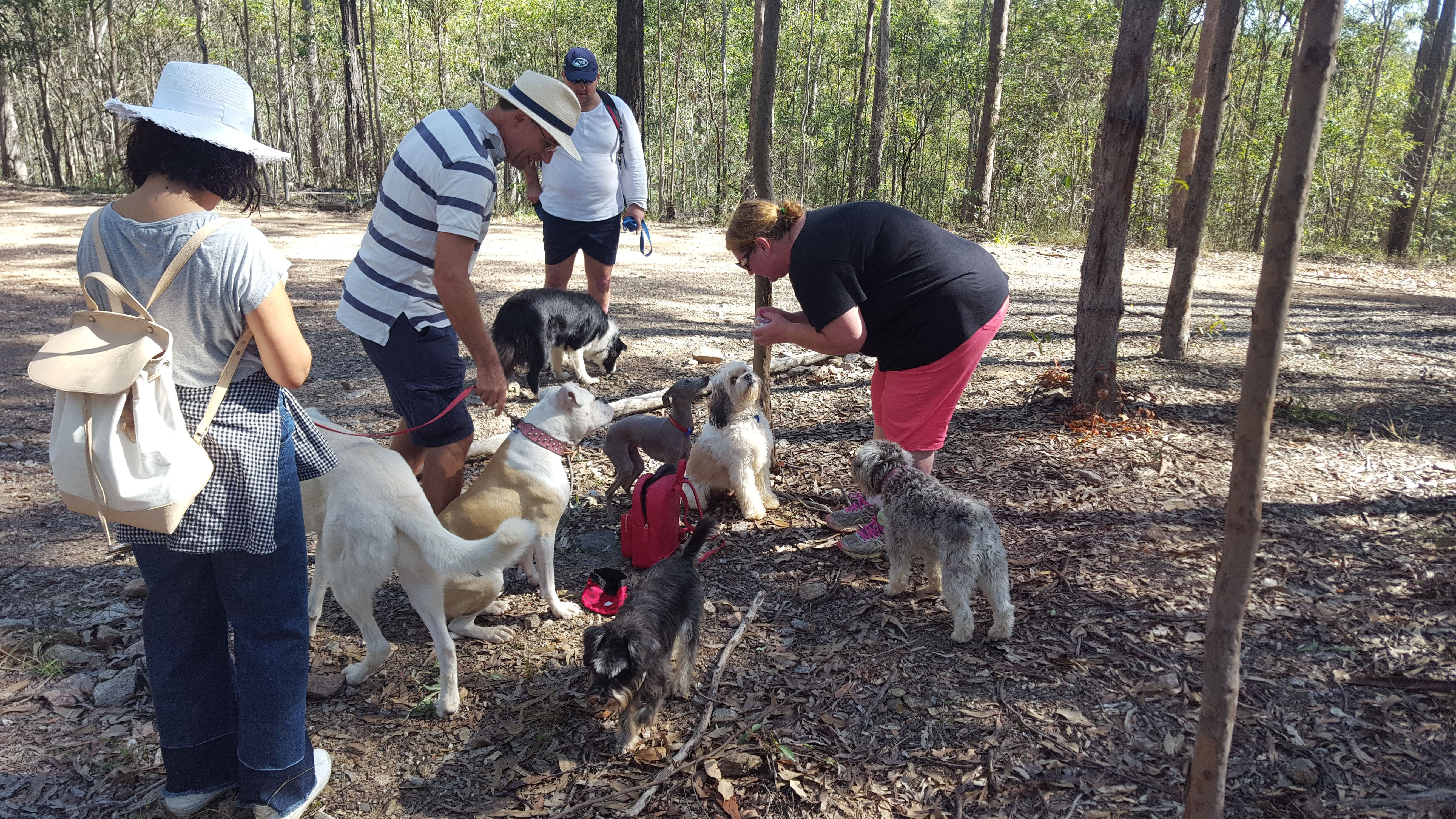 hiking with doggos and puppers - brisbane and gold coast