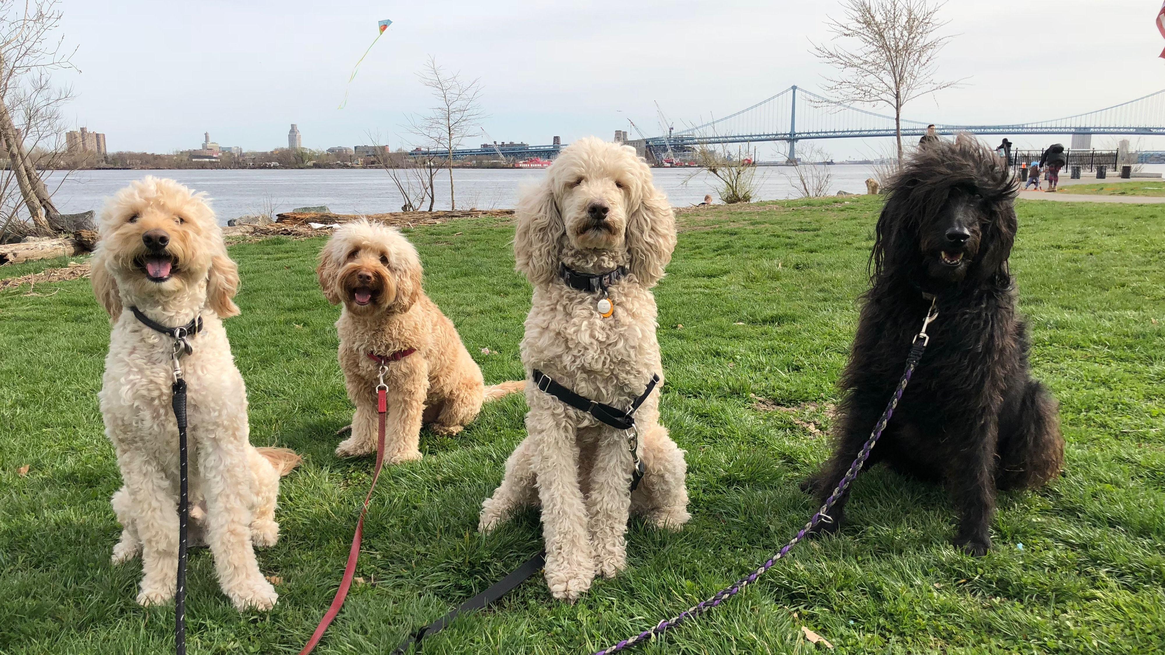 Barks On Tap Seger Dog Park Meetup