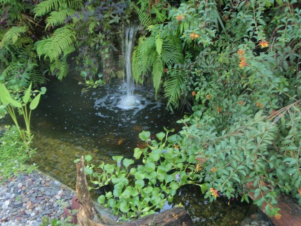 How To Create A Beautiful Fish Pond In Your Garden