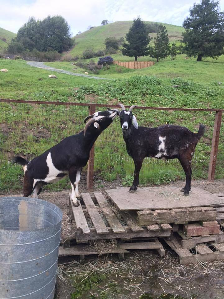 Rancho Compasión Farm Sanctuary Volunteers