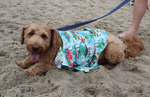 13th Annual Dewey Beach Doodle Romp Meetup