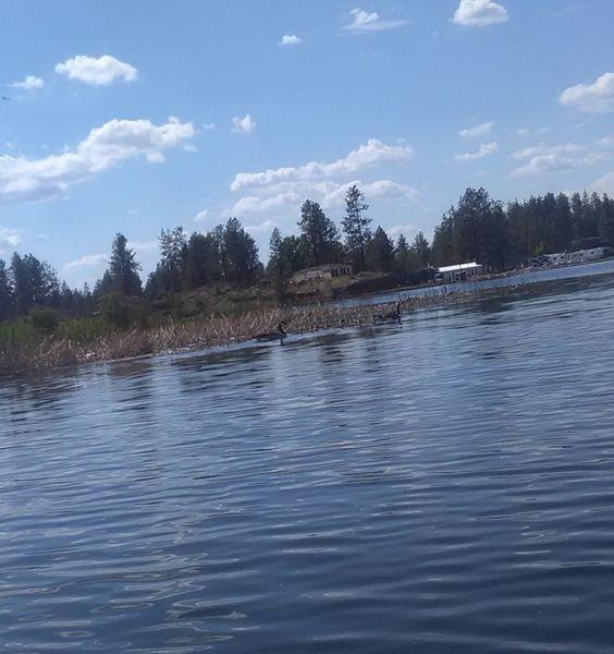 Photos - Spokane Canoe And Kayak Club (Spokane, WA)
