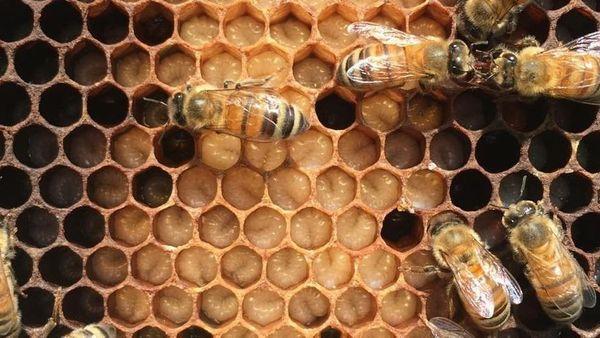 Science On Tap - January - Beekeeping