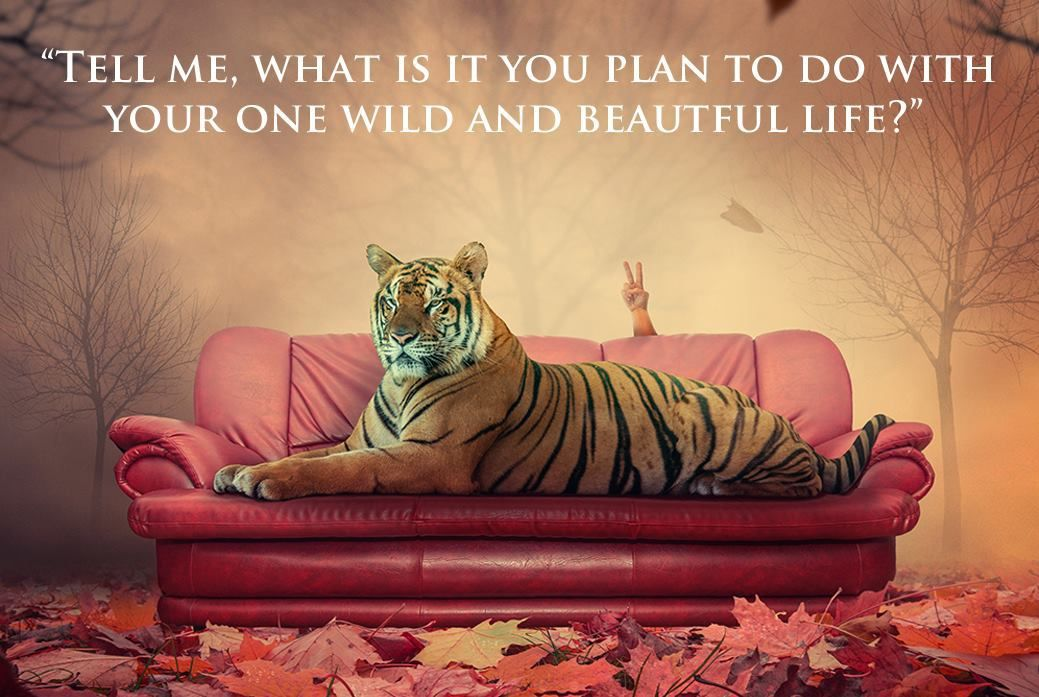 Your Wild Life Coaching and Creativity