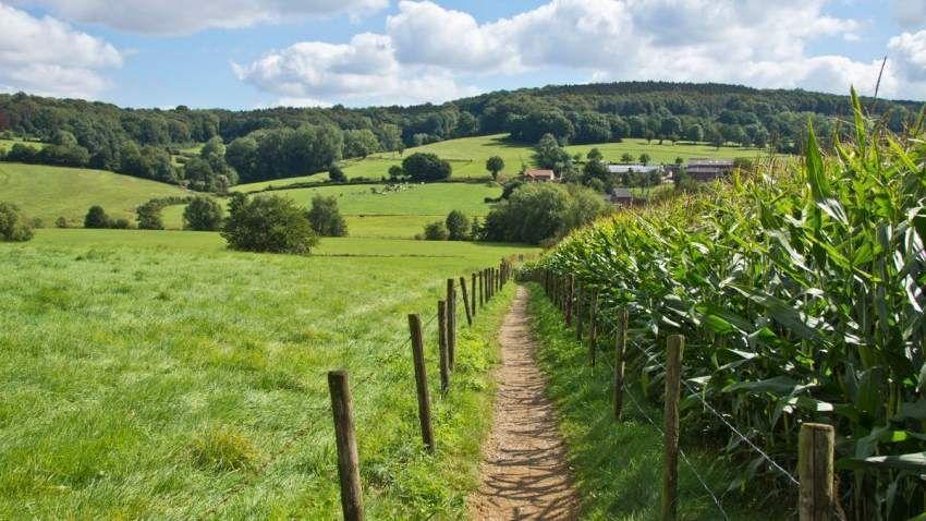 Mindful Nature Walks