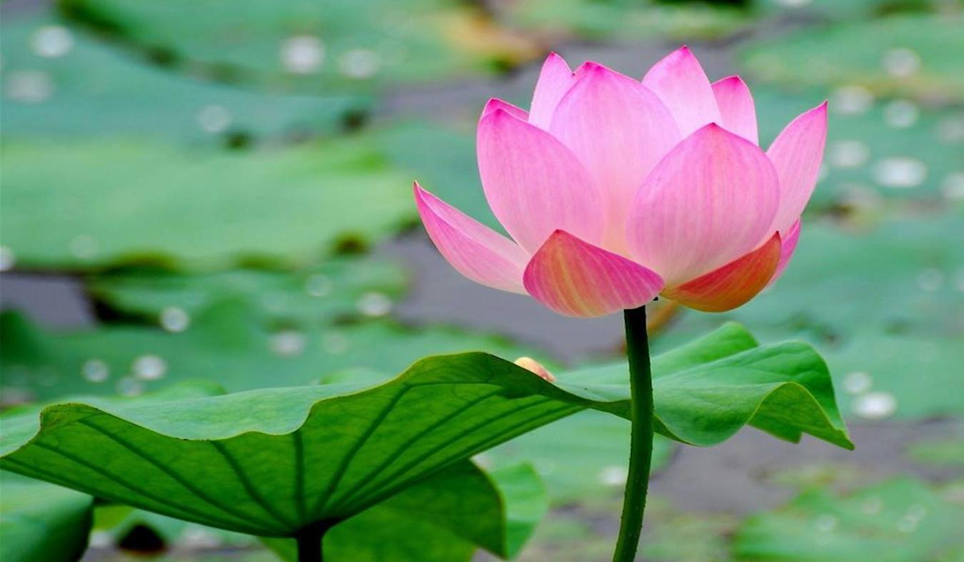 Meditation Gathering - Free