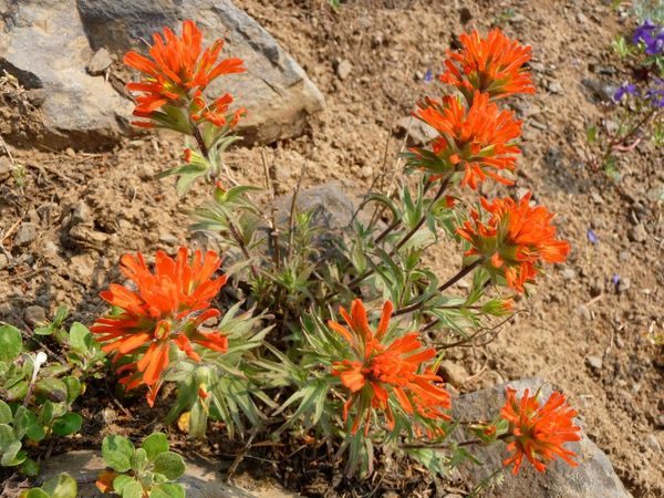 native plant society of oregon