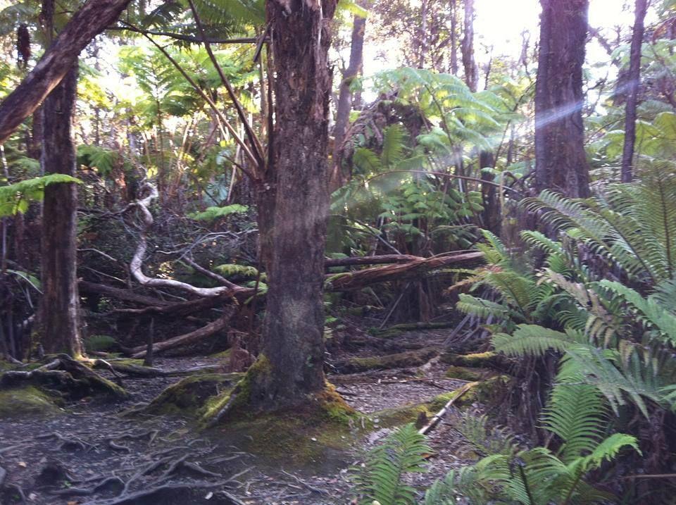 Huna Phoenix Hawaiian Wisdom on Wellness and Energy Meetup