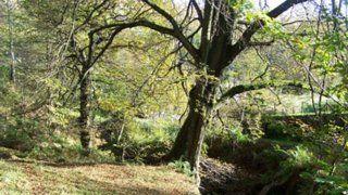 Calder Woodland Way Part 3