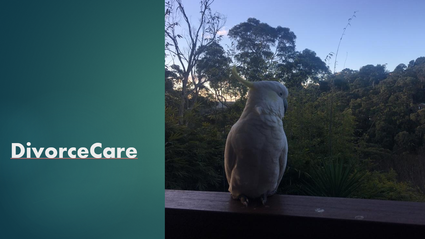 Divorce Care, In, But Not Limited to, Parramatta