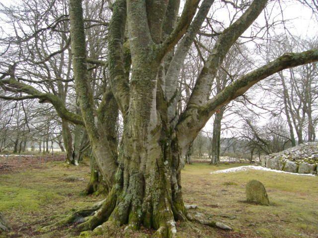 Pagans of Portlandia