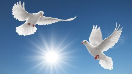 Reiki and Pellowah Training and Shares ~ Melbourne