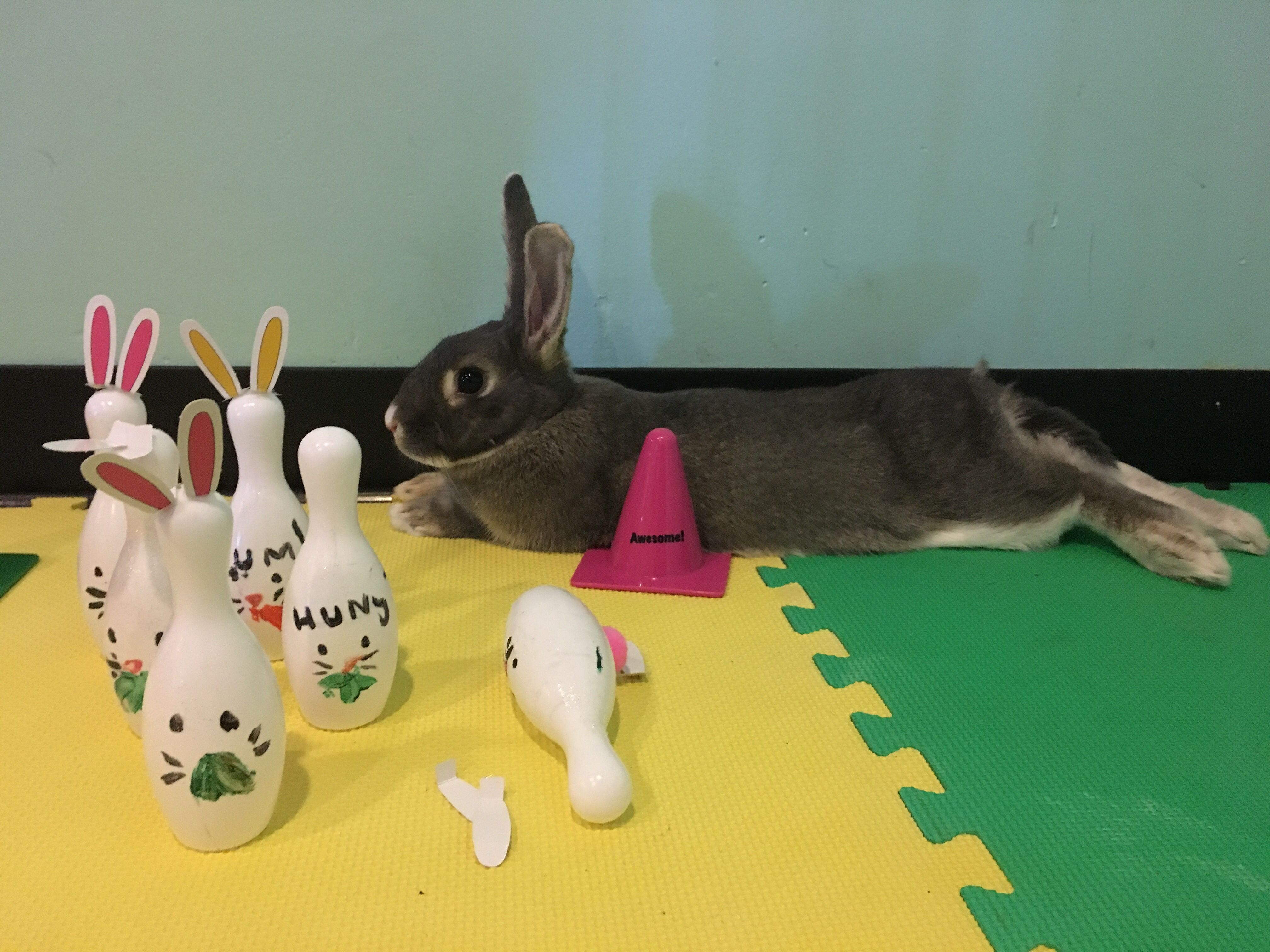 Triangle Rabbits Meetup Group