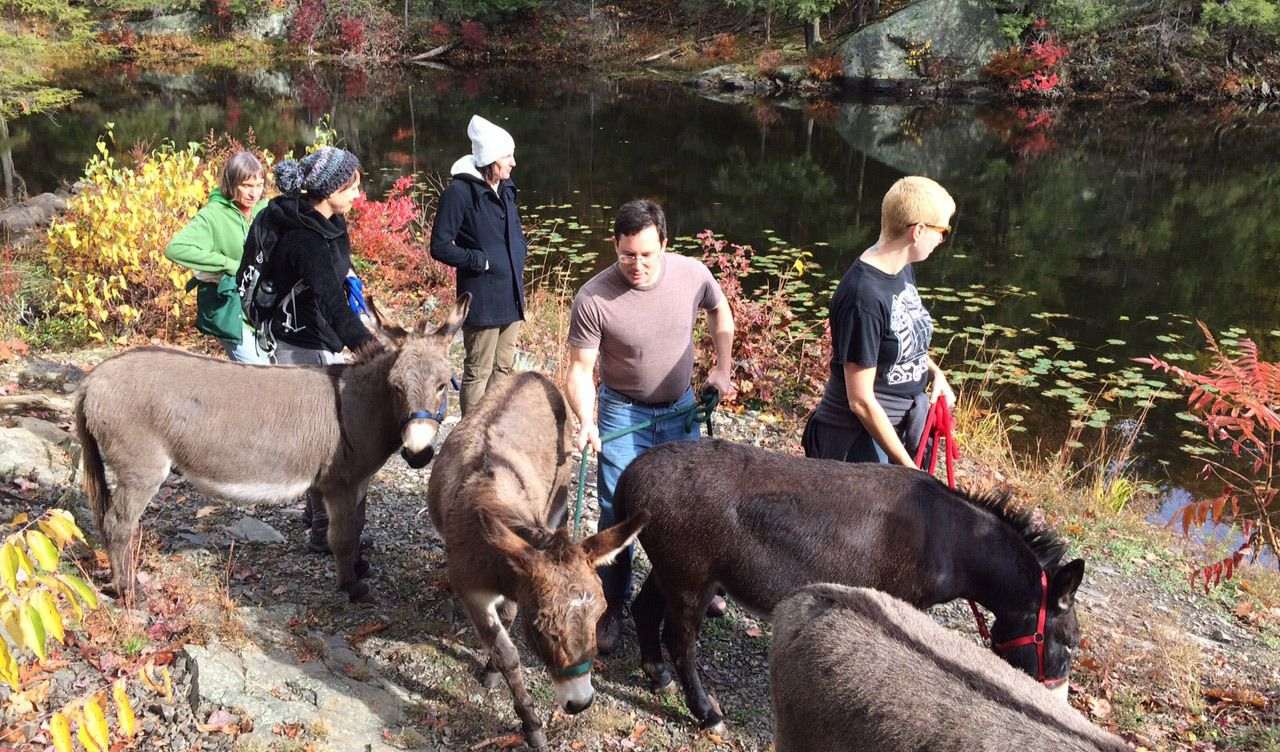 Hudson Valley Walk with Donkeys