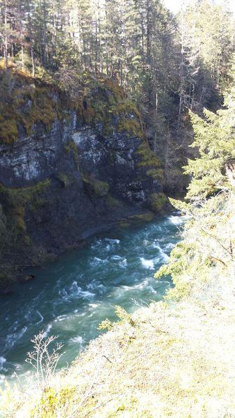 Hike Along Cowichan River Near Skutz Falls