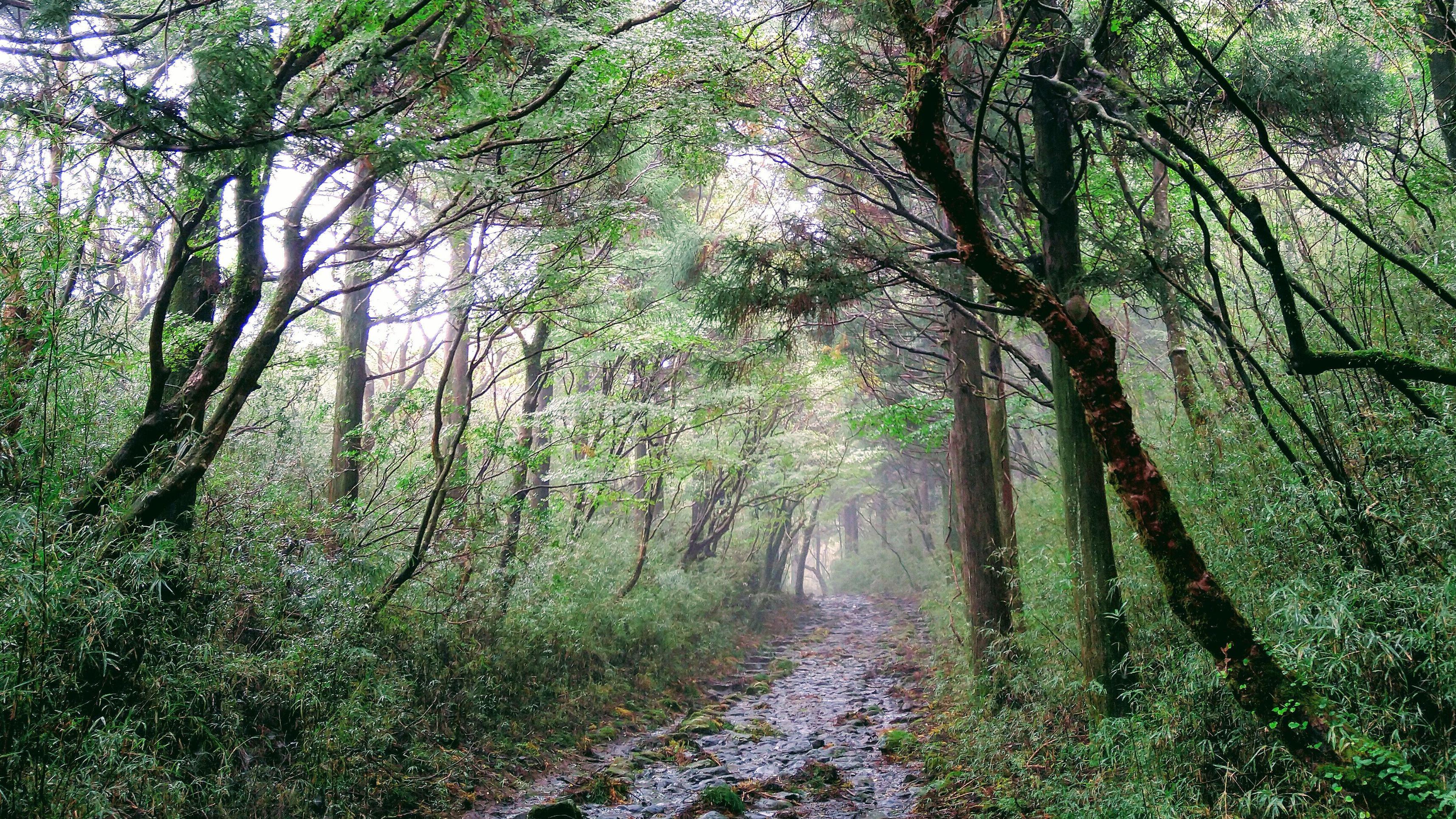 Forest bathing / Shinrin-Yoku: Nature is medicine