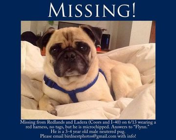 Lost Pug Craigslist For Pug Puppy Abq Pug Meetup Group