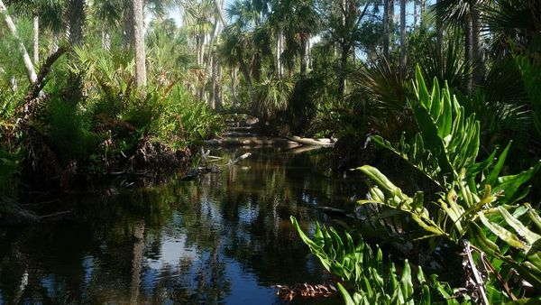 Hike the Bulow Plantation hiking trail north of Ormond ...