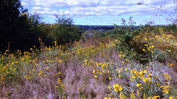 Heathens in Nature: Timberman Ridge Preserve