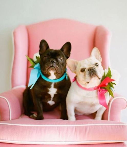French bulldog club regents park