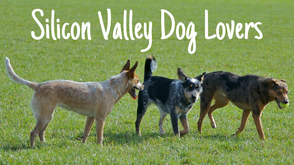 Silicon Valley Dog Lovers
