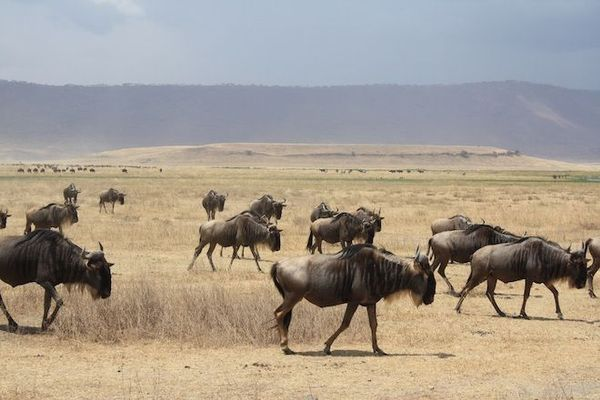 Explore wildlife, nature and culture in Kenya, the heart of Africa! starting at Kenya