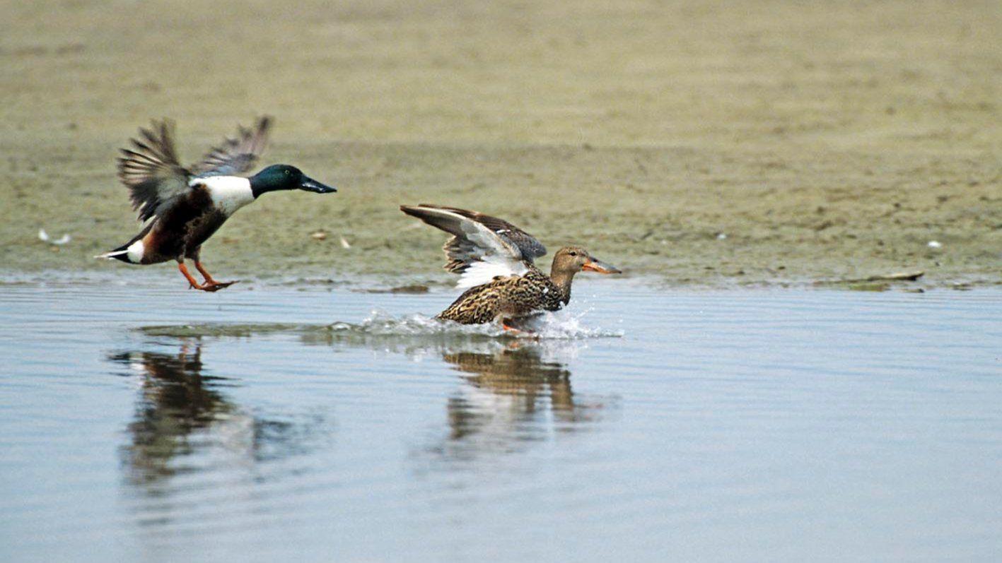 Wet-Bird Hash (AH3#7)