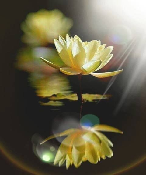 Inner Balance Meditation