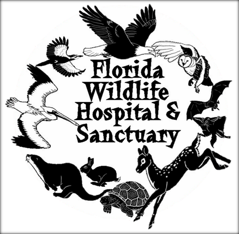 Enchanted Forest Hike and Wildlife Encounter