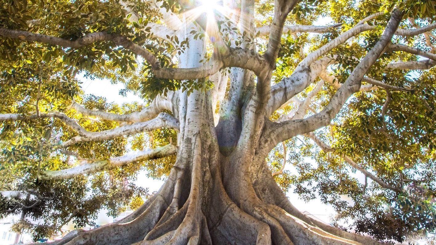 Bain de Forêt: à la découverte des Eco-Pratiques
