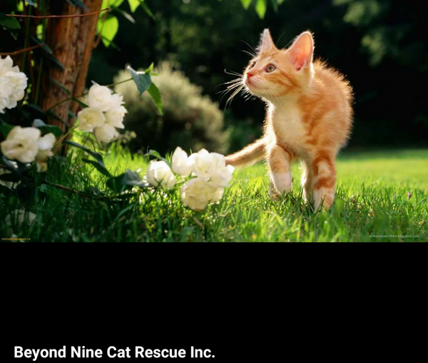 🐱 Volunteer Give Back to the Community at Local No Kill